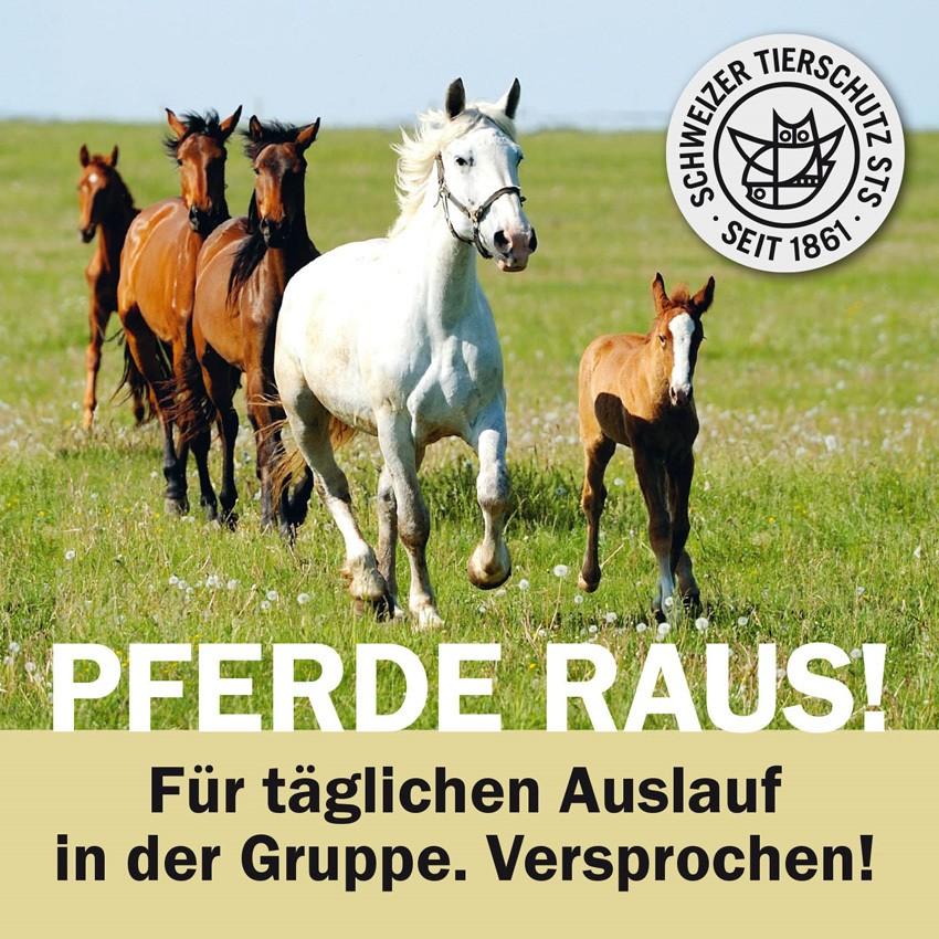 Schweizer Tierschutz STS - PFERDE RAUS!